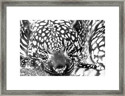 Framed Print featuring the photograph Entering The Dream Realm by Steven Santamour