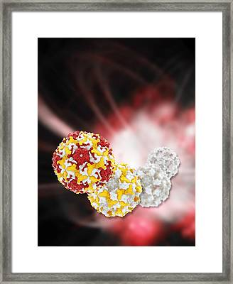 Enterovirus Capsid Proteins Structure Framed Print by Science Photo Library
