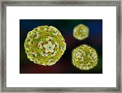 Enterovirus D68 Framed Print by Kateryna Kon