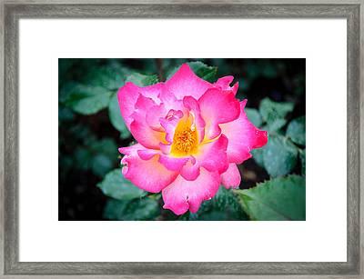 Enthusiasm  Framed Print by Roxy Hurtubise