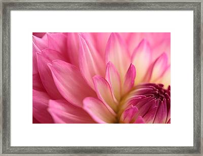 Enticement Framed Print by Connie Handscomb
