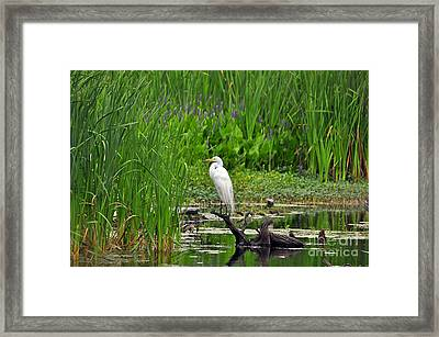 Enticing Egret Framed Print by Al Powell Photography USA