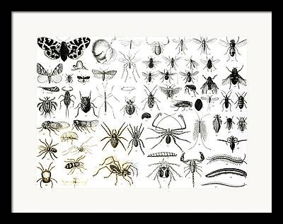 Arachnida Framed Prints