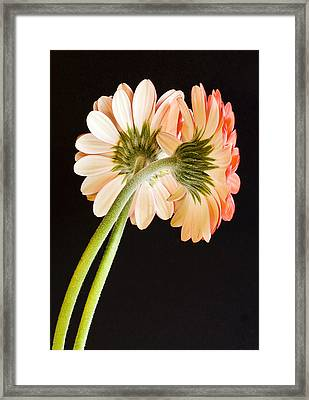 Entwined Framed Print