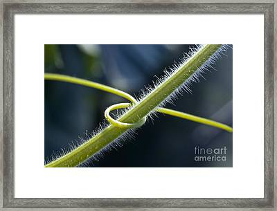 Entwined Framed Print by Heiko Koehrer-Wagner