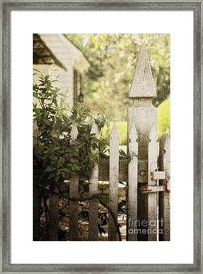 Entwined Framed Print by Margie Hurwich