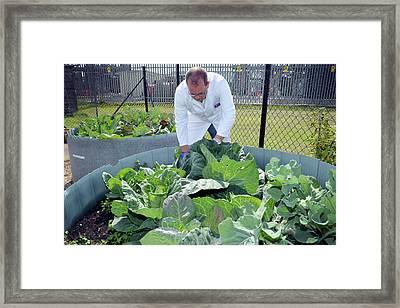 Environmental Crop Monitoring Framed Print by Public Health England