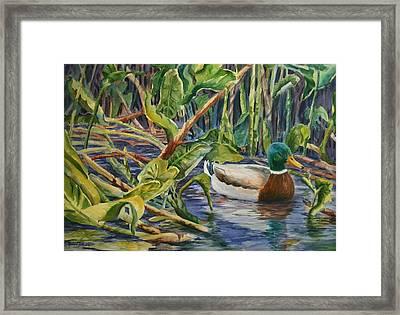 Environmentally Sound - Mallard Duck Framed Print by Roxanne Tobaison