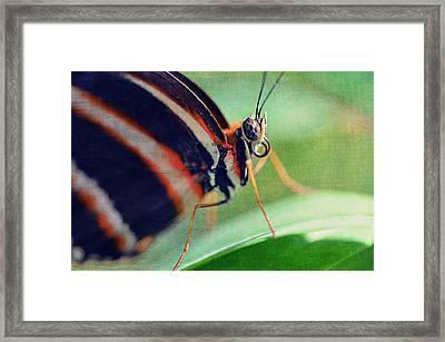 Ephemera I Framed Print