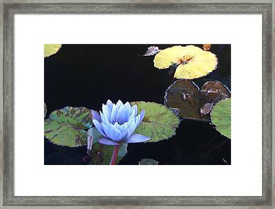Ephemeral Ghostly Lily Framed Print