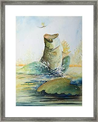 Ephemerella Dorothea Framed Print by Ken Marsden
