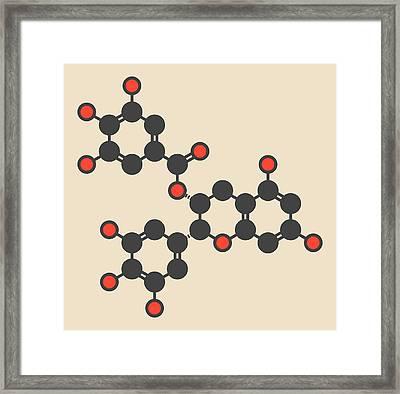 Epigallocatechin Gallate Molecule Framed Print