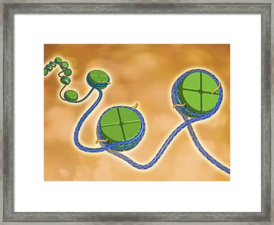 Epigenetics Framed Print by Science Source