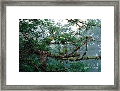 Epiphytes Framed Print
