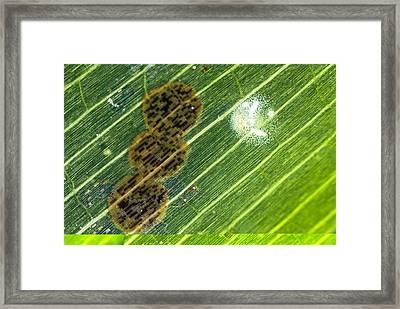 Epiphytes On Seagrass Framed Print