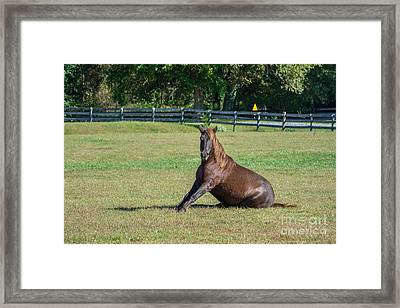 Equestrian Beauty Framed Print by Charles Kraus