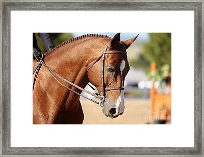 Framed Print featuring the photograph Equestrian Grace by Lincoln Rogers