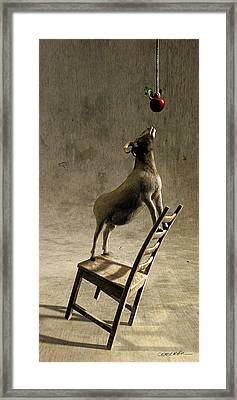 Equilibrium Framed Print by Cynthia Decker