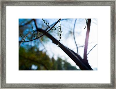 Equilibrium Framed Print by Tgchan