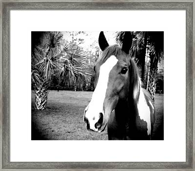 Equine Beauty Framed Print by Chasity Johnson