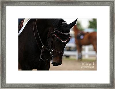 Equine Concentration Framed Print
