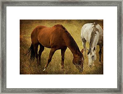 Equine Friends Framed Print