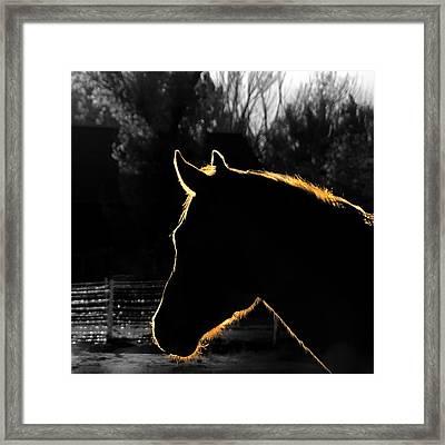 Equine Glow Framed Print by Steven Milner