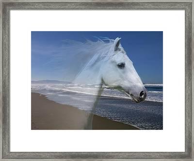 Equine Shores Framed Print