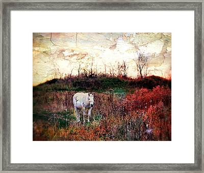 Equine Stare Framed Print