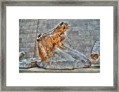 Framed Print featuring the photograph Equus by Ross Henton