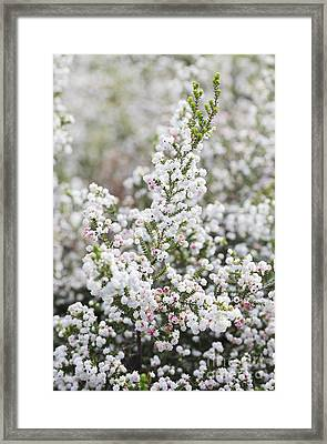 Erica Heather Framed Print by Neil Overy