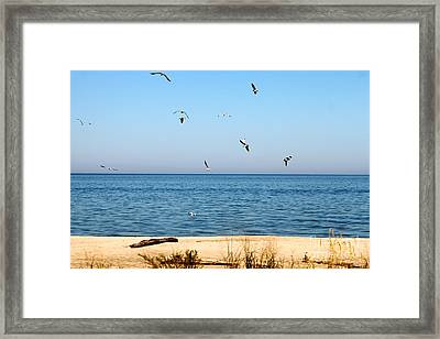 Framed Print featuring the photograph Erie Birds And Beach by Jay Nodianos