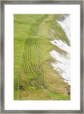 Eroded Paths On The South West Coast Framed Print by Ashley Cooper
