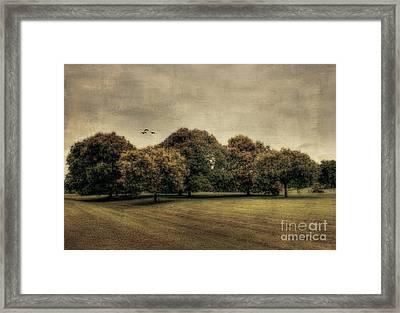 Es Una Hermosa Noche Framed Print by Darren Fisher