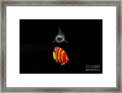 Escape Framed Print by Victoria Herrera