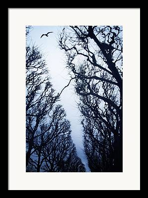 Silhouette Of Tree Framed Prints