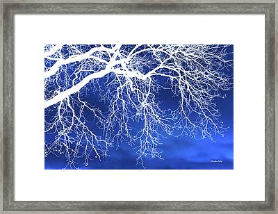 Escaping The Blues Weeping Tree Art Framed Print by Christina Rollo