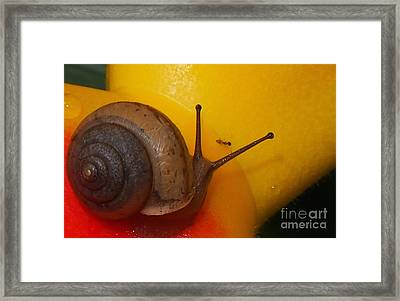Escargo Or Chocolate Covered Ants  Framed Print