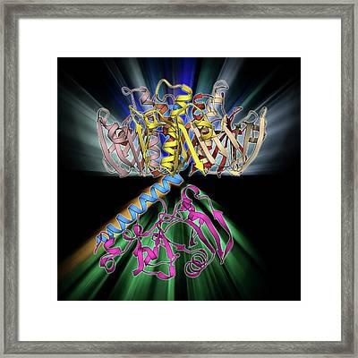 Escherichia Coli Heat-labile Enterotoxin Framed Print