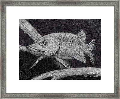 Esox Masquinongy Framed Print by Larry Green