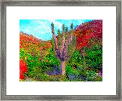 Espiritu Santo Cactus 2 Framed Print by Gerhardt Isringhaus