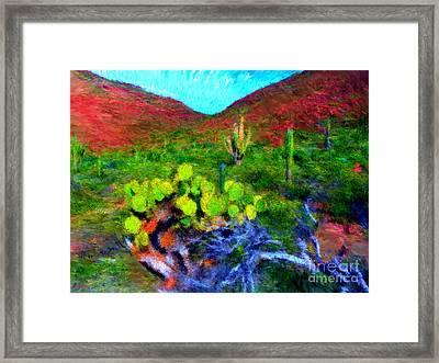 Espiritu Santo Cactus 3 Framed Print by Gerhardt Isringhaus