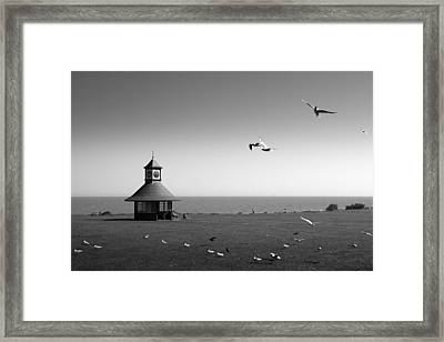 Esplended Gulls Framed Print by David Davies