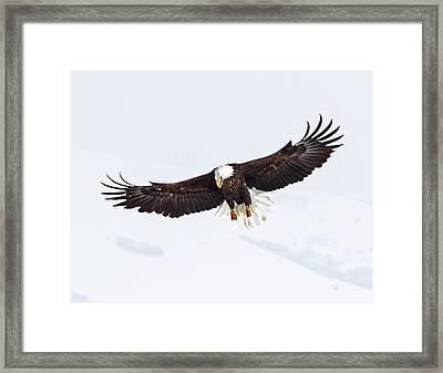 Essence Of Eagle Framed Print