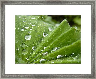 Framed Print featuring the photograph Essence Of Life by Agnieszka Ledwon
