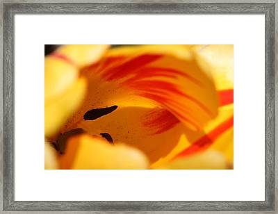 Essence Of Tulip Framed Print by  Andrea Lazar