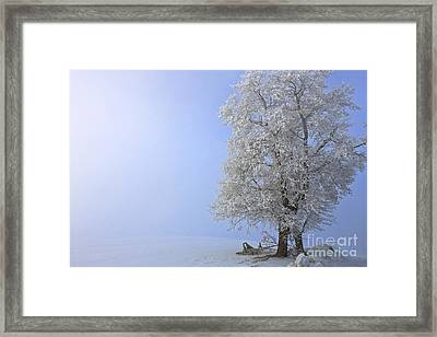 Essence Of Winter Framed Print by Beve Brown-Clark Photography