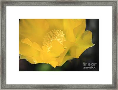 Essence Of Yellow Framed Print by Cathy Dee Janes