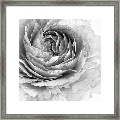 Essence Framed Print by Priska Wettstein