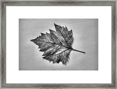 Essence...leaf Exposer Merge Framed Print by Tom Druin